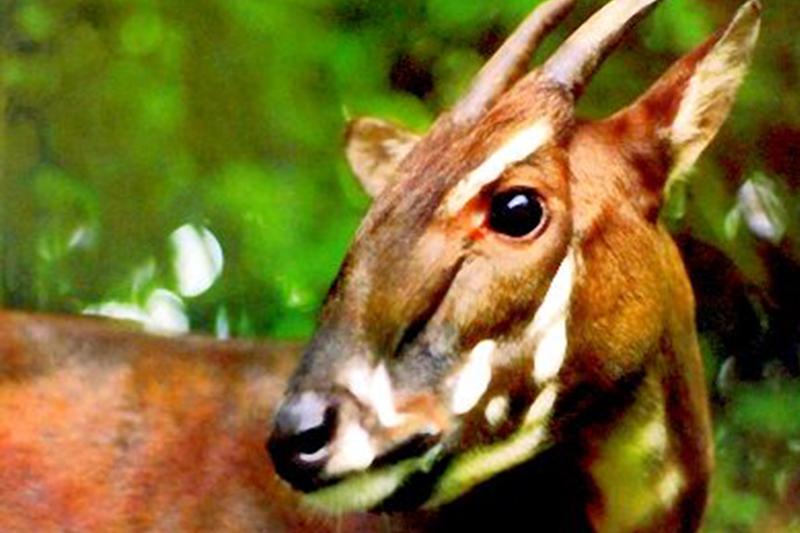 Bảo tồn đa dạng sinh học Vườn Quốc gia Vũ Quang với đa dạng sinh vật và đa dạng hệ sinh thái