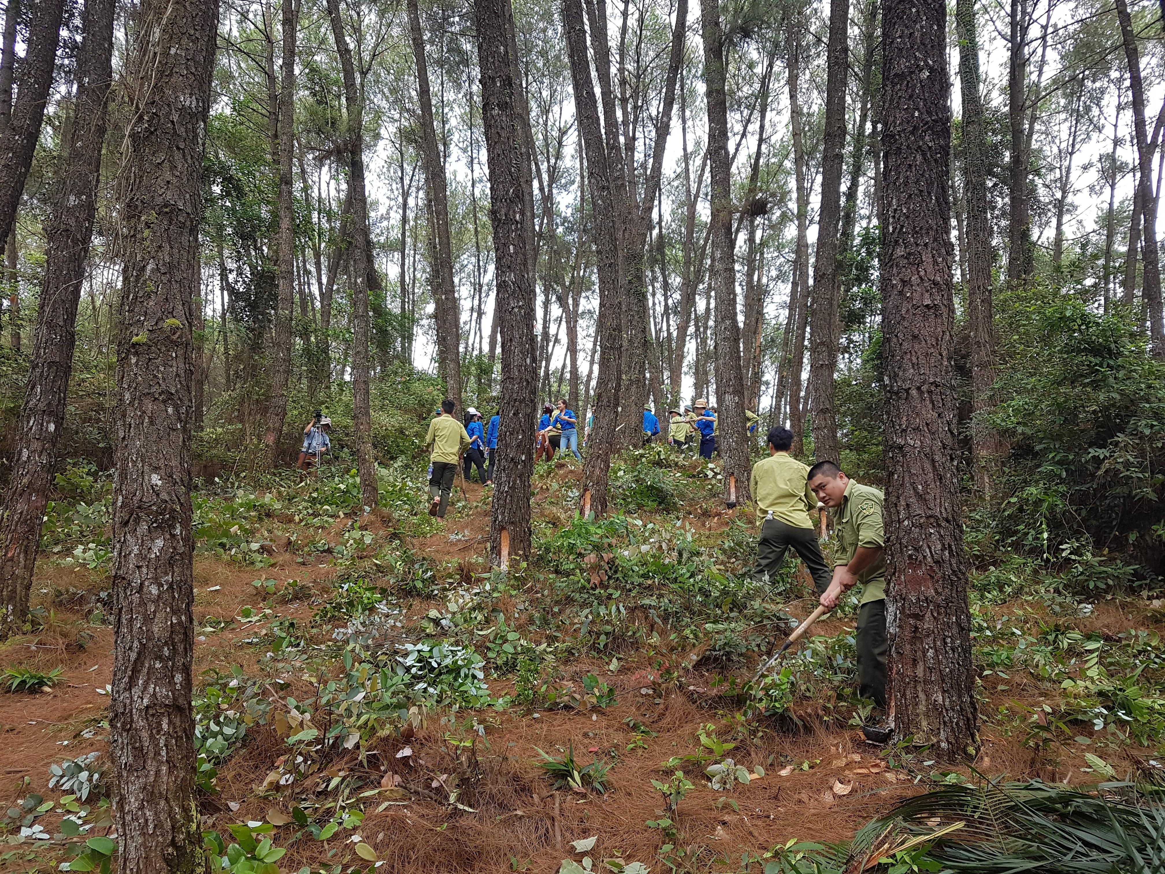 Đoàn viên, Thanh niên  xung kích Bảo vệ rừng !