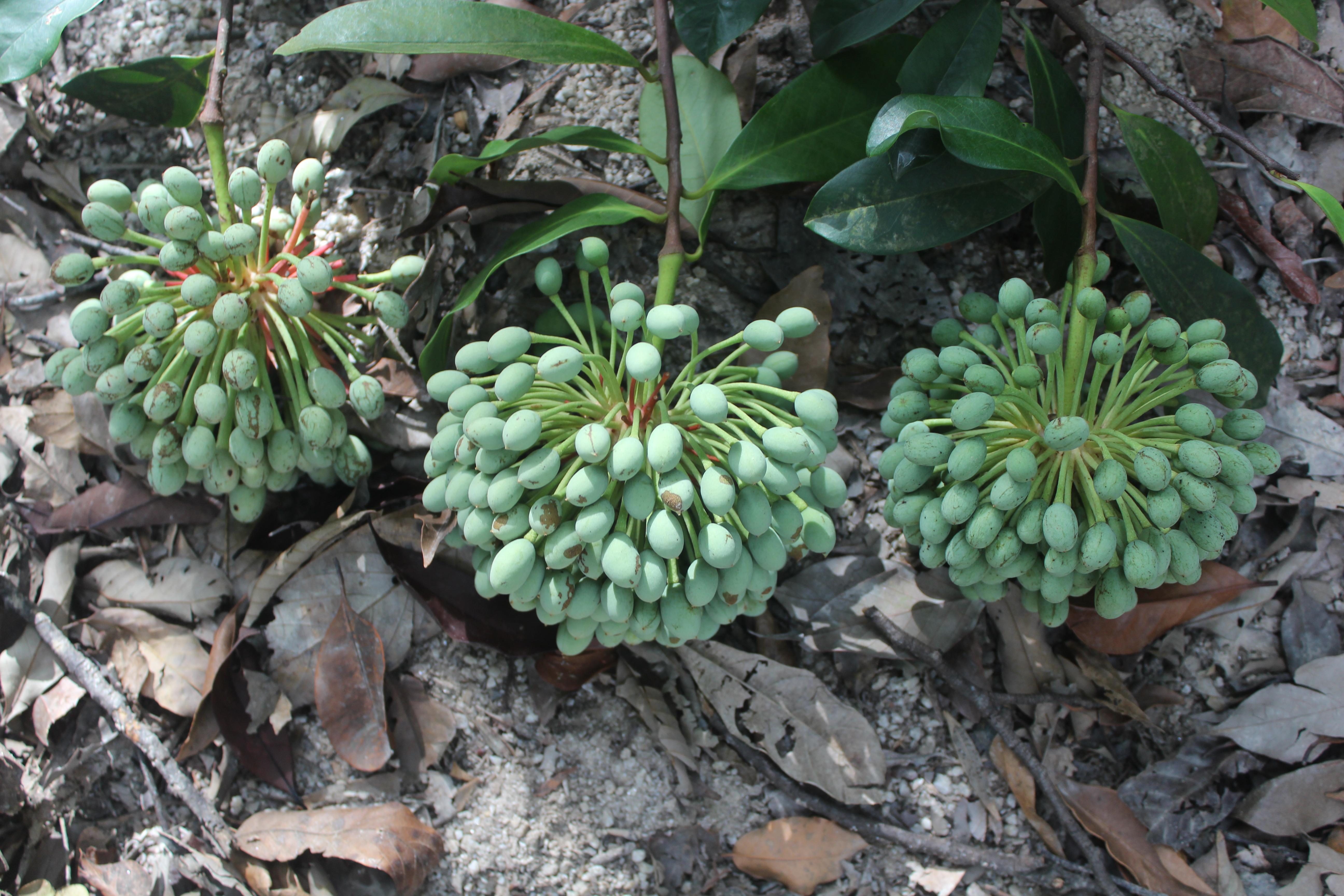 Danh lục thực vật Vườn Quốc gia Vũ Quang - Hà Tĩnh (Flora list Vuquang Nationalpark)