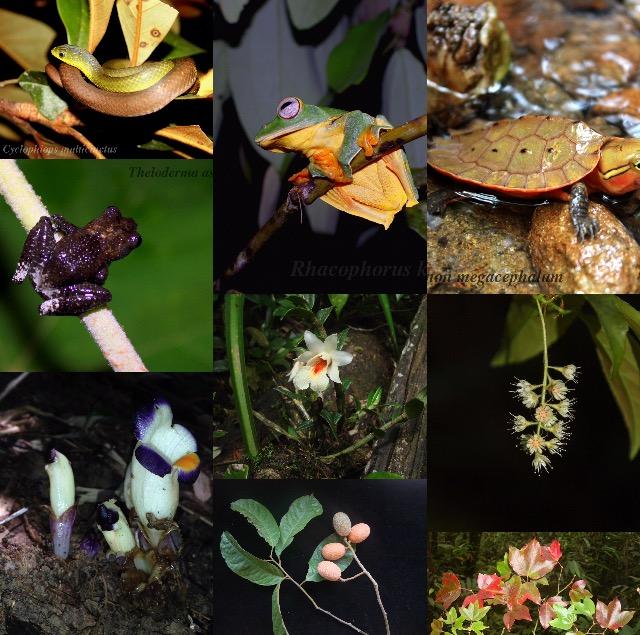 Đa dạng sinh học tại Vườn quốc gia Vũ Quang