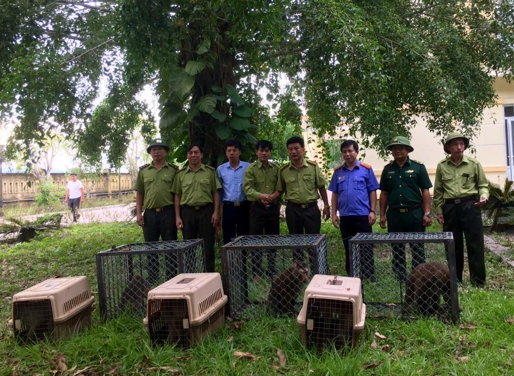Vườn Quốc Gia Vũ Quang tiếp nhận và tái thả 12 cá thể Linh trưởng nguy cấp, quý hiếm về với tự nhiên