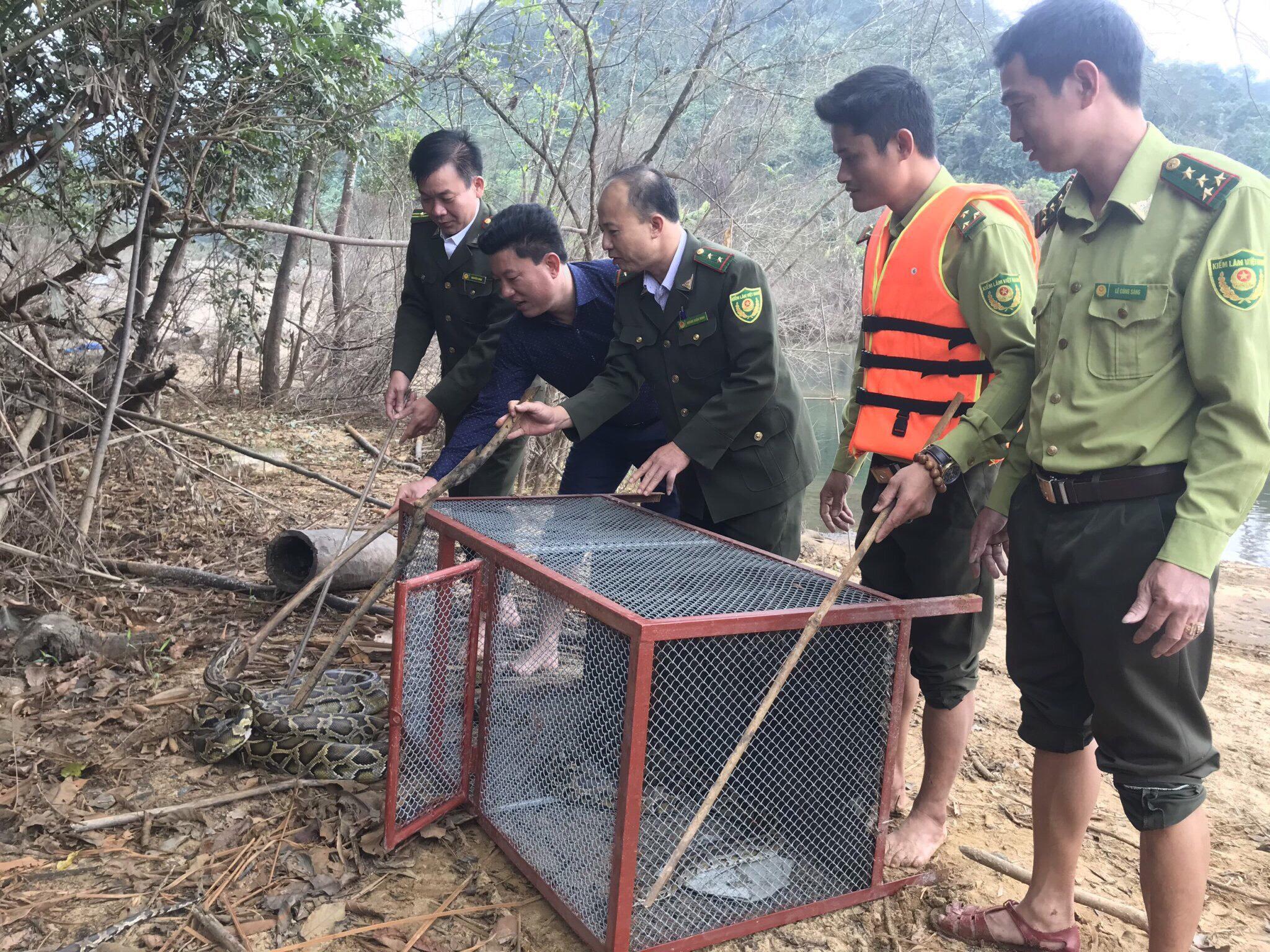 Tái thả 5 cá thể Trăn gấm quý hiếm về môi trường tự nhiên tại Vườn Quốc gia Vũ Quang