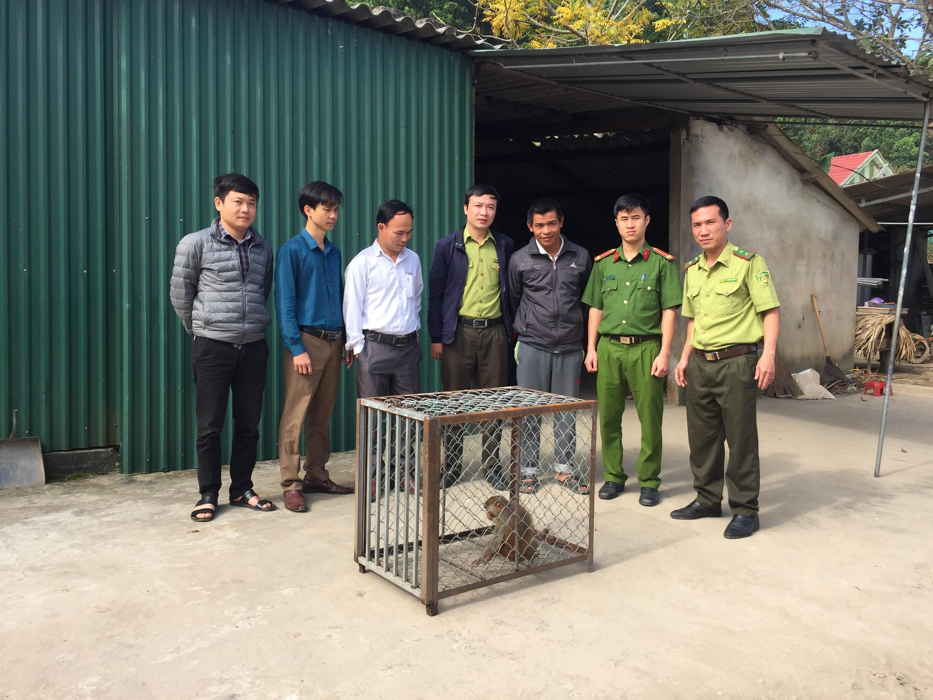Tiếp nhận 1 cá thể khỉ vàng từ  người dân trên địa bàn huyện Vũ Quang