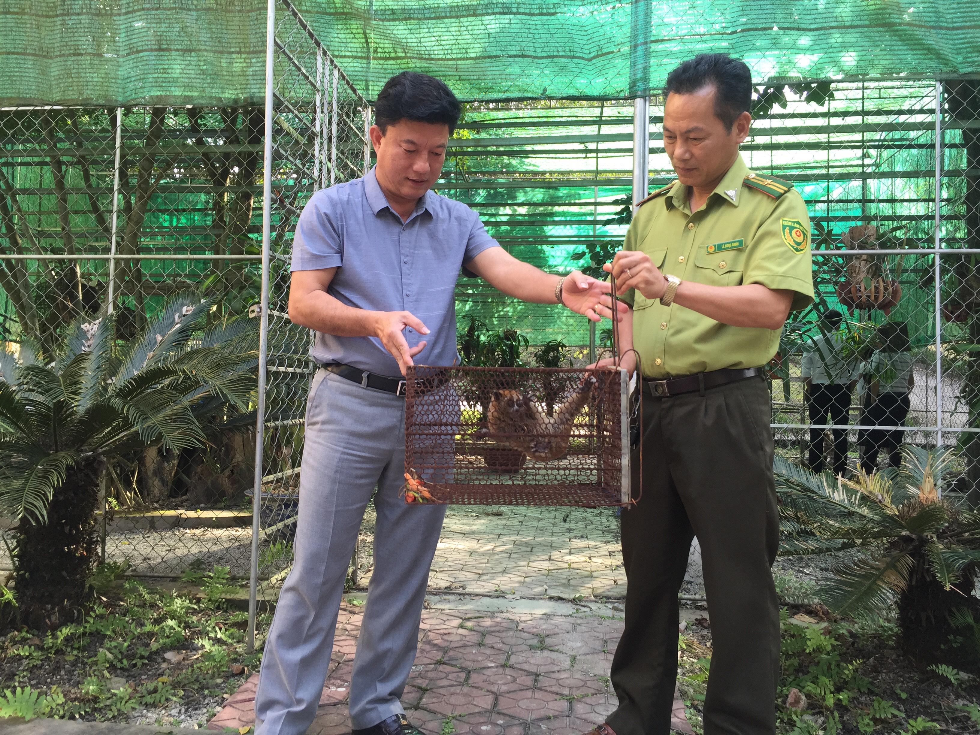 Vườn Quốc gia Vũ Quang tiếp nhận một cá thể cu ly nhỏ