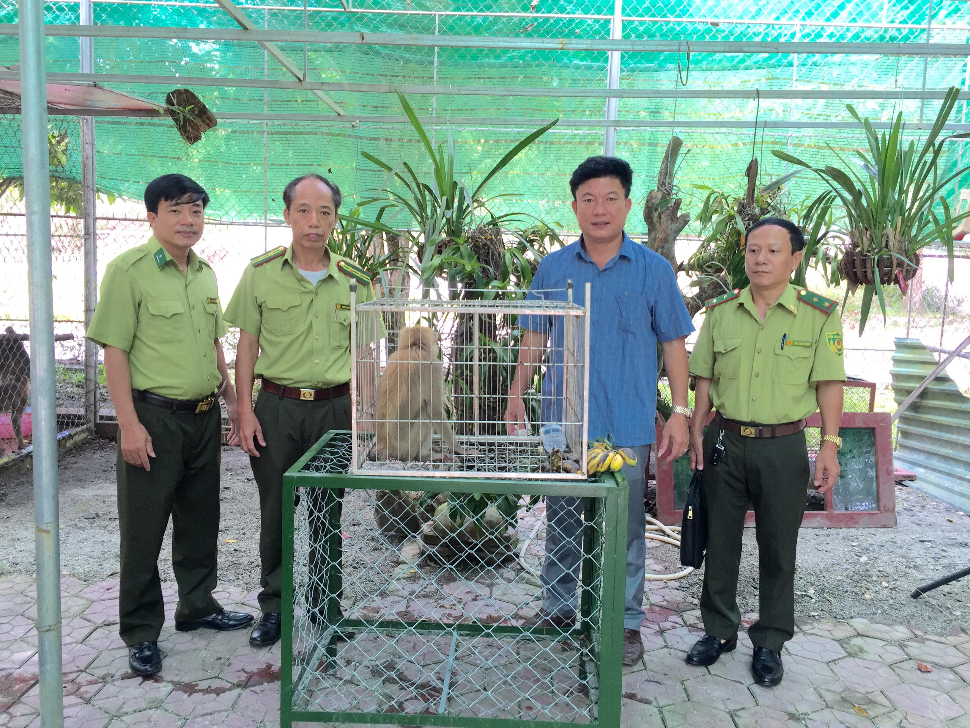 Vườn Quốc gia Vũ Quang tiếp nhận 01 cá thể động vật hoang dã quý hiếm
