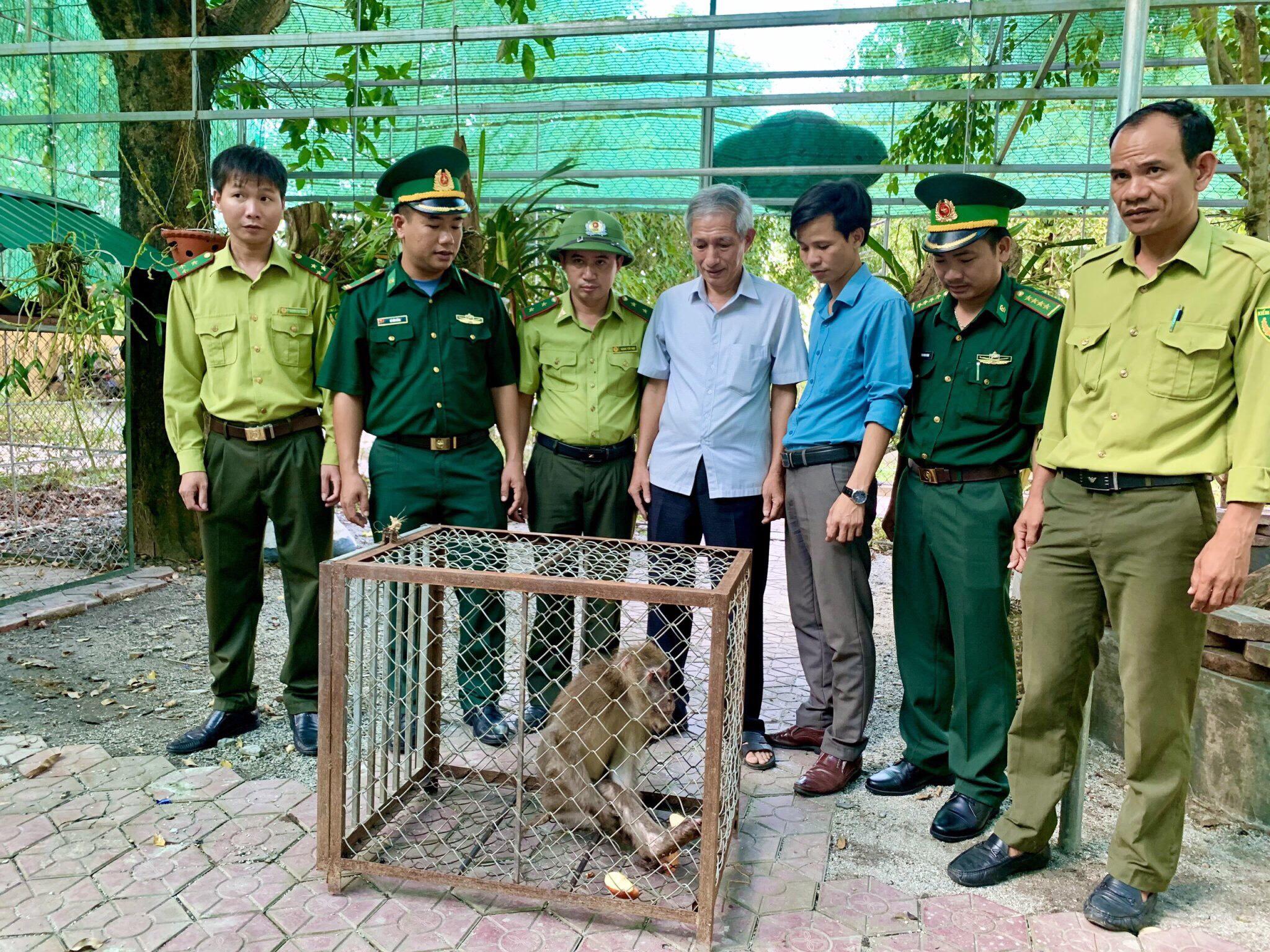 Vườn Quốc gia Vũ Quang tiếp nhận một cá thể Khỉ mốc từ lực lượng chức năng huyện Hương Khê
