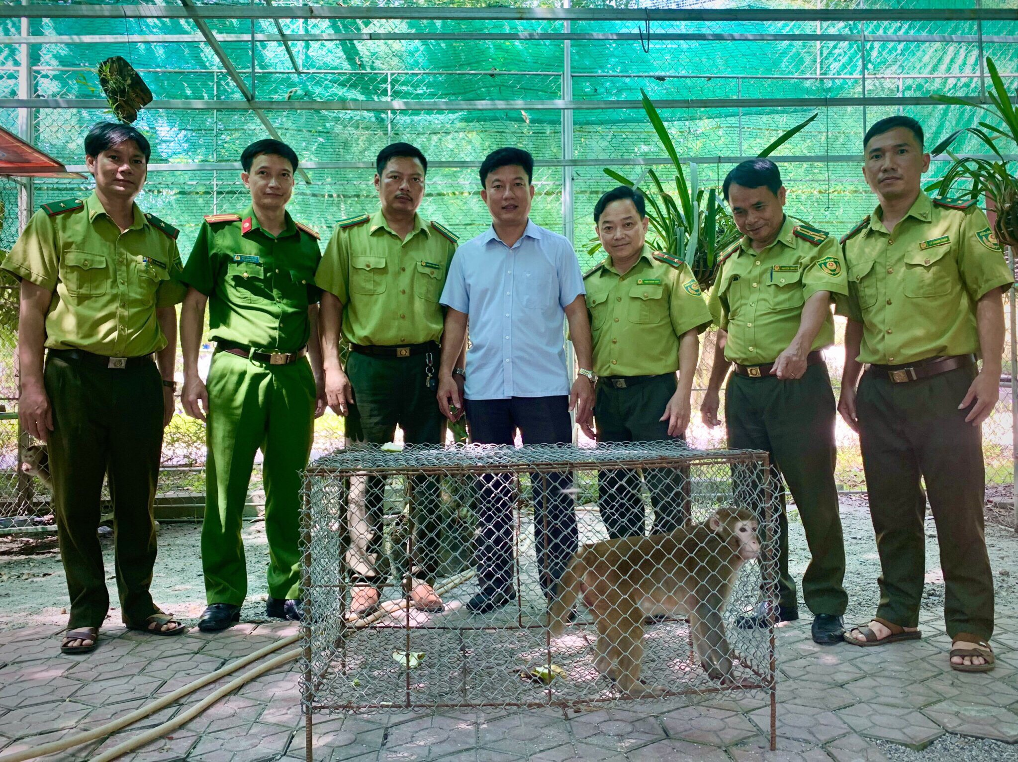 Một cá thể Khỉ vàng được bàn giao cho Vườn Quốc gia Vũ Quang để thả về môi trường tự nhiên