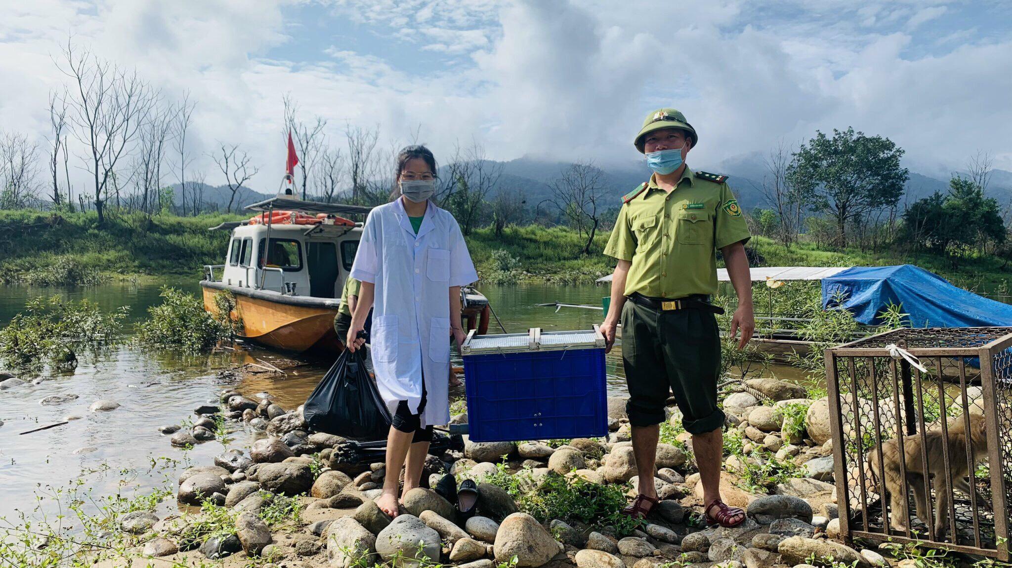 Vườn Quốc gia Vũ Quang tiếp nhận và tái thả 8 cá thể khỉ đuôi lợn