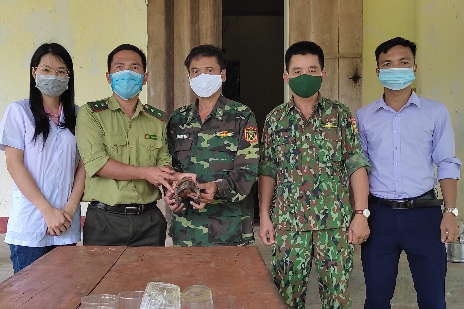 Vườn Quốc gia Vũ Quang tiếp nhận cá thể rùa Sa Nhân quý hiếm