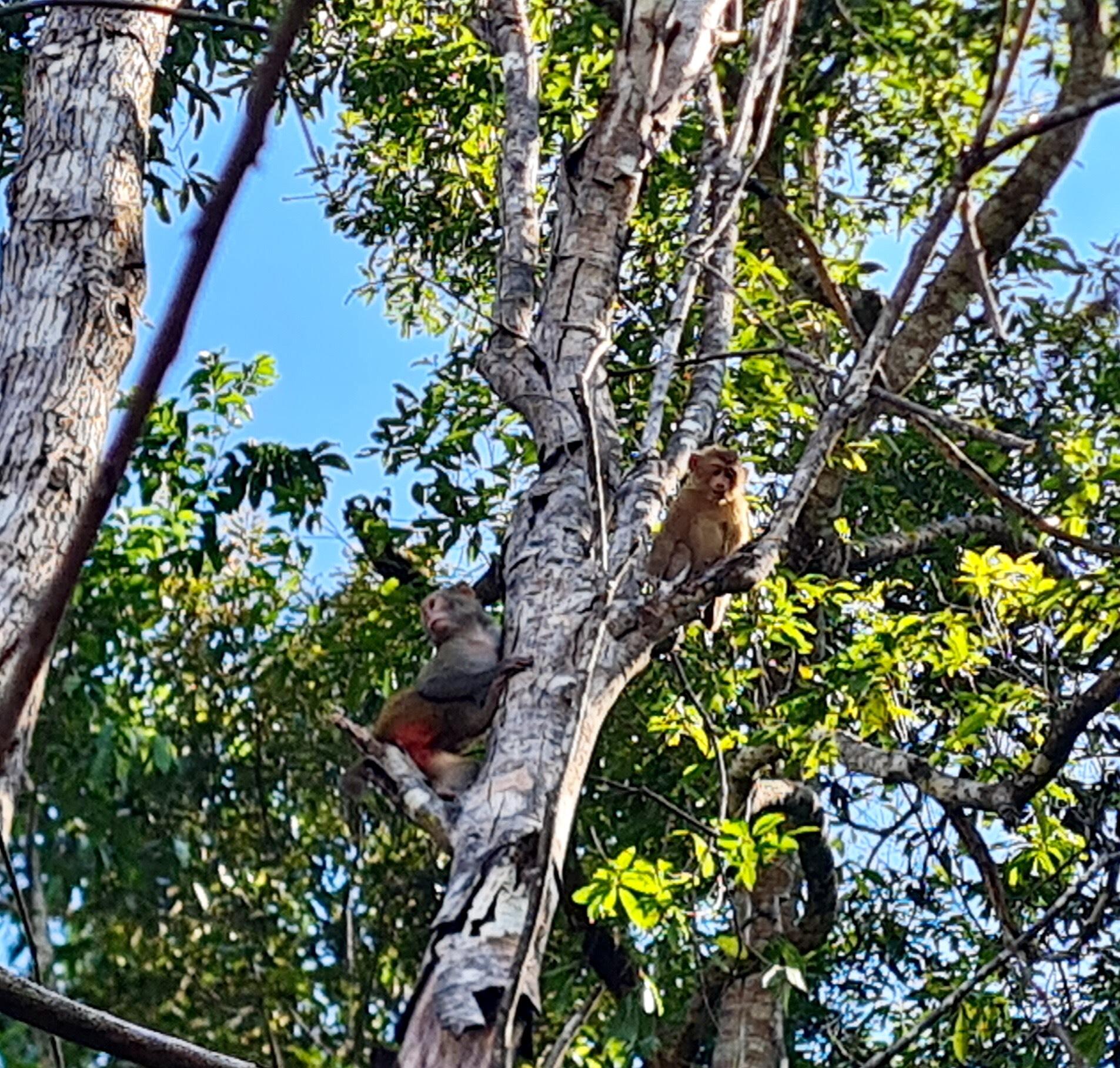 Vườn Quốc gia Vũ Quang tiến hành tái thả cá thể động vật hoang dã quý hiếm về với môi trường tự nhiên