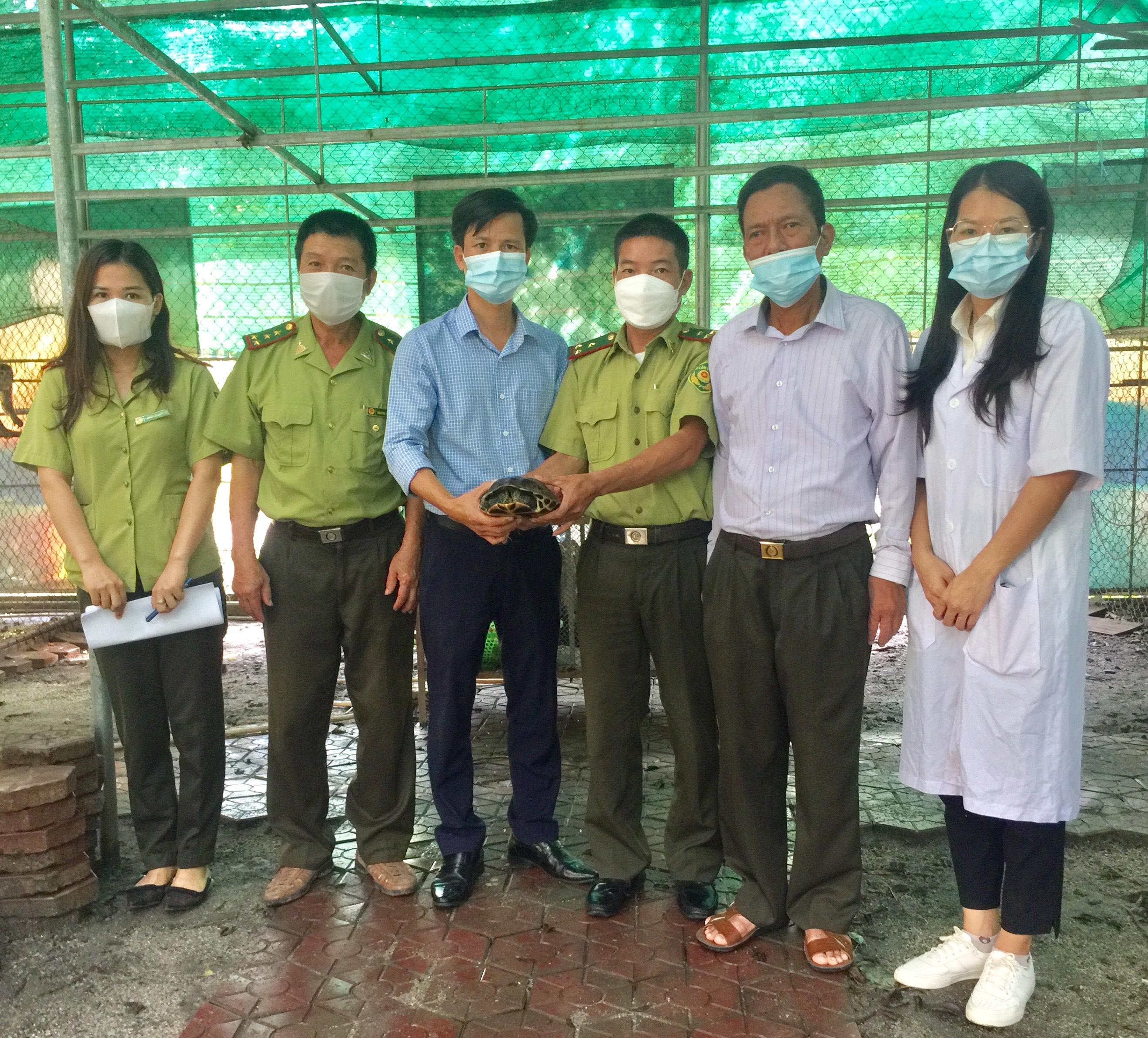 Một cá thể rùa Cổ Sọc được bàn giao cho Vườn Quốc gia Vũ Quang