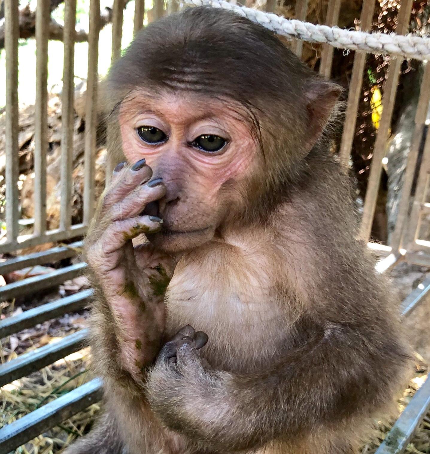 Vườn Quốc gia Vũ Quang tiếp nhận 1 cá thể động vật hoang dã quý, hiếm từ Hạt Kiểm lâm huyện Cẩm Xuyên để chăm sóc, cứu hộ.