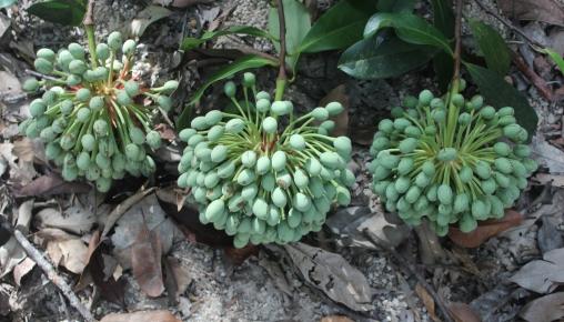 Hệ thực vật